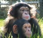 Monkey World