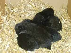 Five one week old kittens